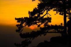 Solnedgång med det silhouetted trädet Arkivbild