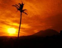 Solnedgång med en kokospalm som förgrund Arkivbild