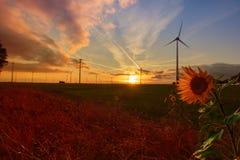 Solnedgång med en solros av ett landskap med vindkraftenergi arkivfoton