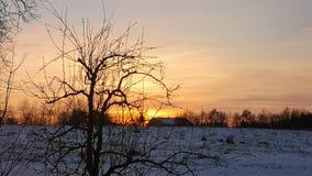 Solnedgång med en trädkontur arkivfoton