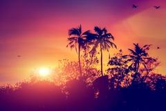 Solnedgång med fåglar Arkivbilder