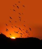 Solnedgång med fåglar Fotografering för Bildbyråer