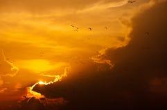 Solnedgång med fåglar som flyger, guld- ljus och molnet fotografering för bildbyråer