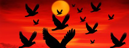 Solnedgång med flygfåglar vektor illustrationer