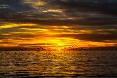 Solnedgång med flygseagulls Royaltyfri Foto