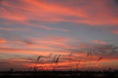 Solnedgång med gräs 2 Arkivbild
