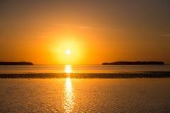 Solnedgång med hägret royaltyfri foto