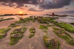Solnedgång med havsmossa Royaltyfria Bilder