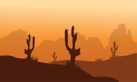 Solnedgång med kaktuns i öken Royaltyfri Bild