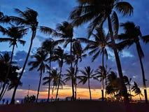 Solnedgång med kokospalmer royaltyfria bilder