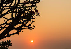 Solnedgång med konturn Arkivbilder