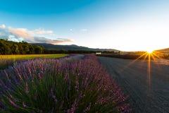 Solnedgång med lavendel royaltyfri bild