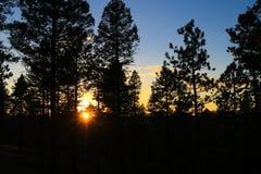 Solnedgång med liten sunburst till och med träden royaltyfri foto