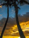 solnedgång med palmträd, ö av Maui, Hawaii Royaltyfri Foto