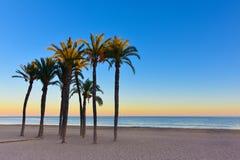Solnedgång med palmträd på stranden Royaltyfria Foton