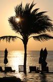 Solnedgång med palmträdet Royaltyfria Bilder