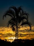 Solnedgång med palmtreekonturn arkivbild