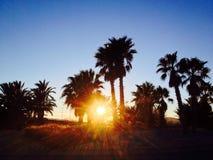 Solnedgång med palmtrees Arkivfoto