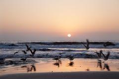 Solnedgång med seagullen Royaltyfri Fotografi