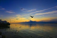 Solnedgång med seagullen Arkivbilder