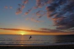 Solnedgång med seagullen, Redondo Beach, Los Angeles, Kalifornien Royaltyfri Bild