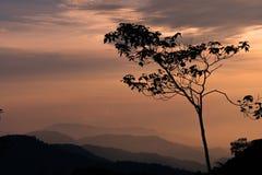 Solnedgång med silhoetteträdet och berg i bakgrunden royaltyfria bilder