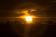 Solnedgång med skogen på horisont Arkivfoton