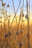 Solnedgång med snigelskalet på fält arkivbilder