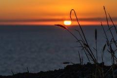Solnedgång med somsugrör och havet Arkivfoto