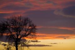Solnedgång med trädet Arkivbild