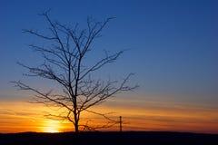 Solnedgång med trädet och blå himmel Royaltyfri Foto
