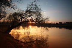 Solnedgång med treen Arkivfoto