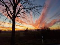 Solnedgång med treen Royaltyfri Fotografi