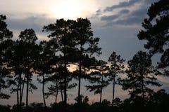 Solnedgång med treesilhouetten Royaltyfri Bild