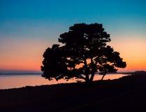 Solnedgång med treesilhouetten Royaltyfria Bilder