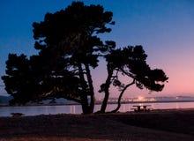 Solnedgång med treesilhouetten Arkivfoton