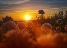 Solnedgång med vegetation i förgrunden Arkivfoton