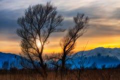 Solnedgång mellan träd Arkivbilder