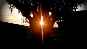 solnedgång mellan trädet Royaltyfri Bild
