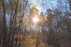 Solnedgång mot bakgrunden av träd Royaltyfri Bild