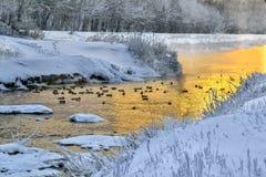 Solnedgång och dimma för vinter guld- över floden, var sväva för änder arkivbild