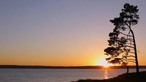 Solnedgång och ensamt träd på floden Ryssland arkivfilmer