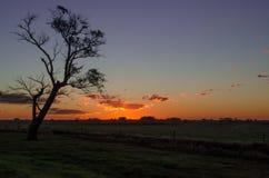 Solnedgång och ett träd långt djupt i Argentina royaltyfria foton