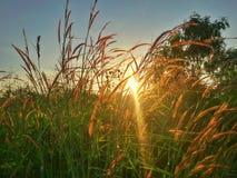 Solnedgång och exponeringsglas Arkivfoto