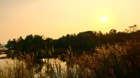 Solnedgång och fälten Royaltyfri Foto