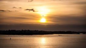Solnedgång och fågel Royaltyfria Foton