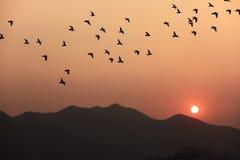 Solnedgång och fåglar Arkivbild