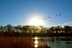 Solnedgång och gäss över floden Arkivbilder