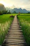 Solnedgång- och gräsplanrisfält i Vang Vieng, Laos royaltyfri bild