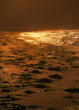 Solnedgång och guld- vågor, ljus, strand, hav av Japan efter storm, Fotografering för Bildbyråer